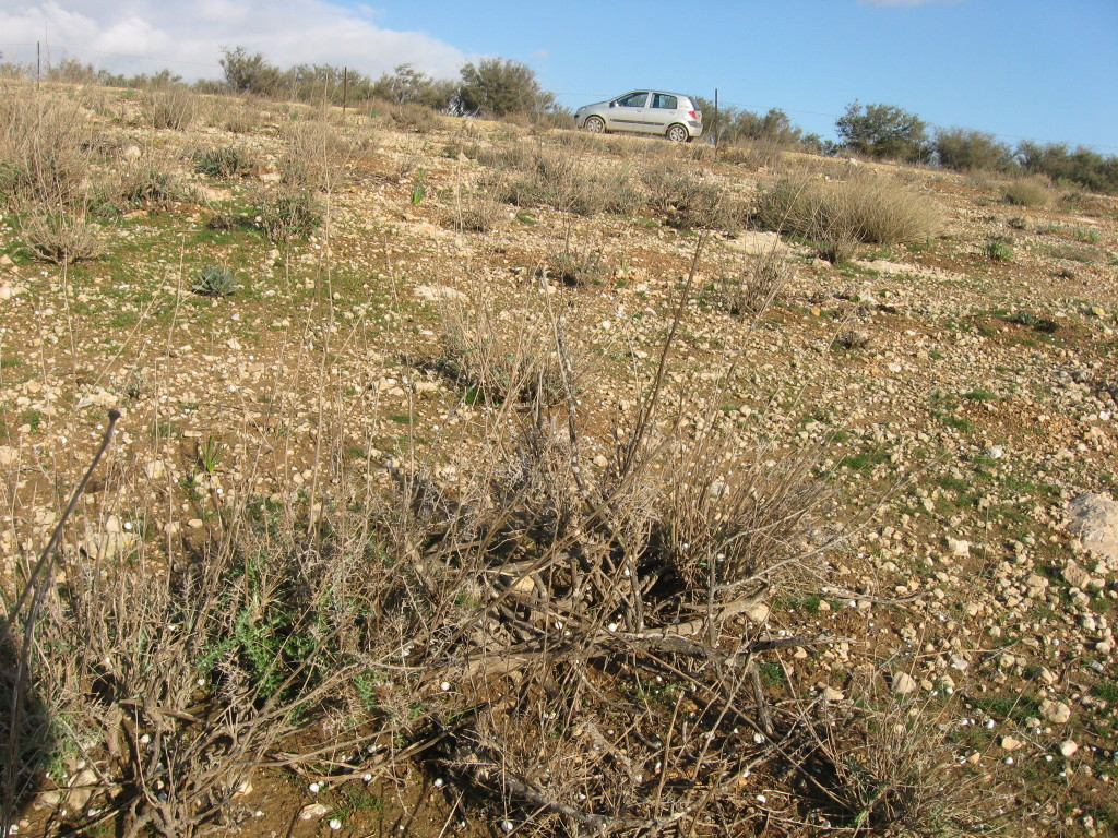 Moderately Grazed Shrubland