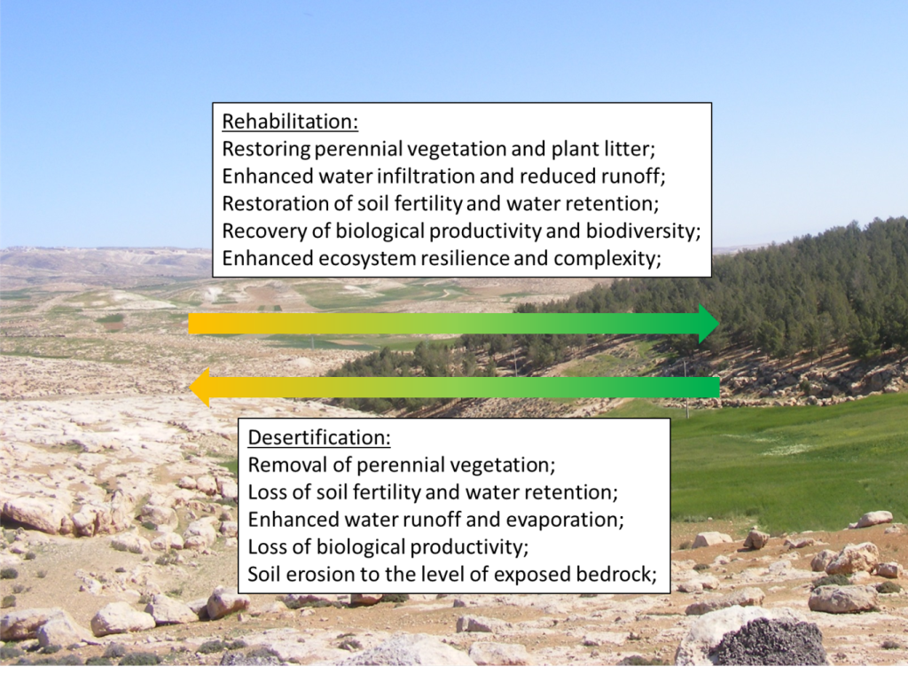 Mechanisms and Impacts of Desertification and Rehabilitation