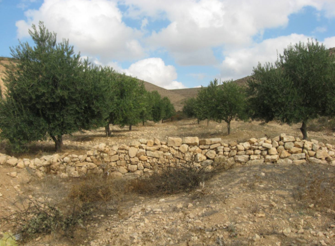 Abu Rabia farm, Eastern Negev