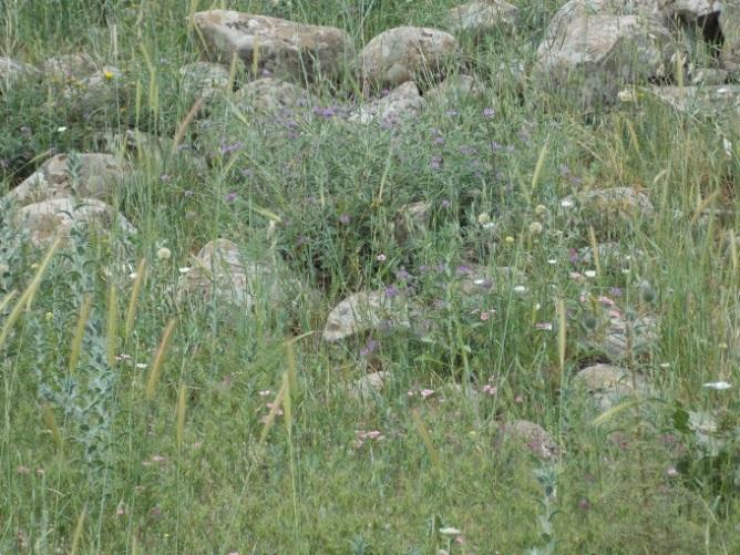 Grazing and Biodiversity #4