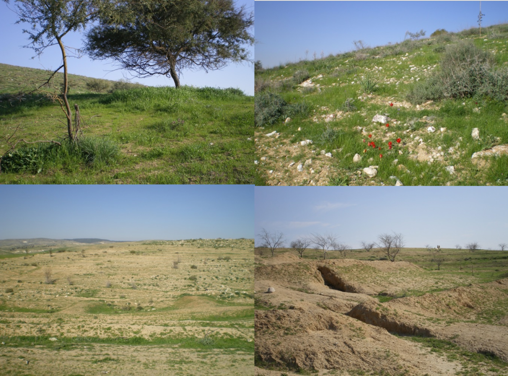 Conserved (top) and Heavily Degraded Negev Landscapes