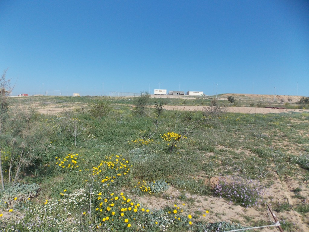 Fig. 2: High yielding permaculture-pasture restored at project Wadi Attir