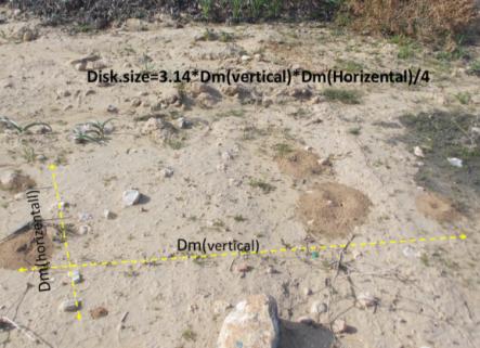 Ant nest size determination