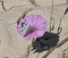 Pollination #1