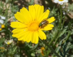 Pollination #2