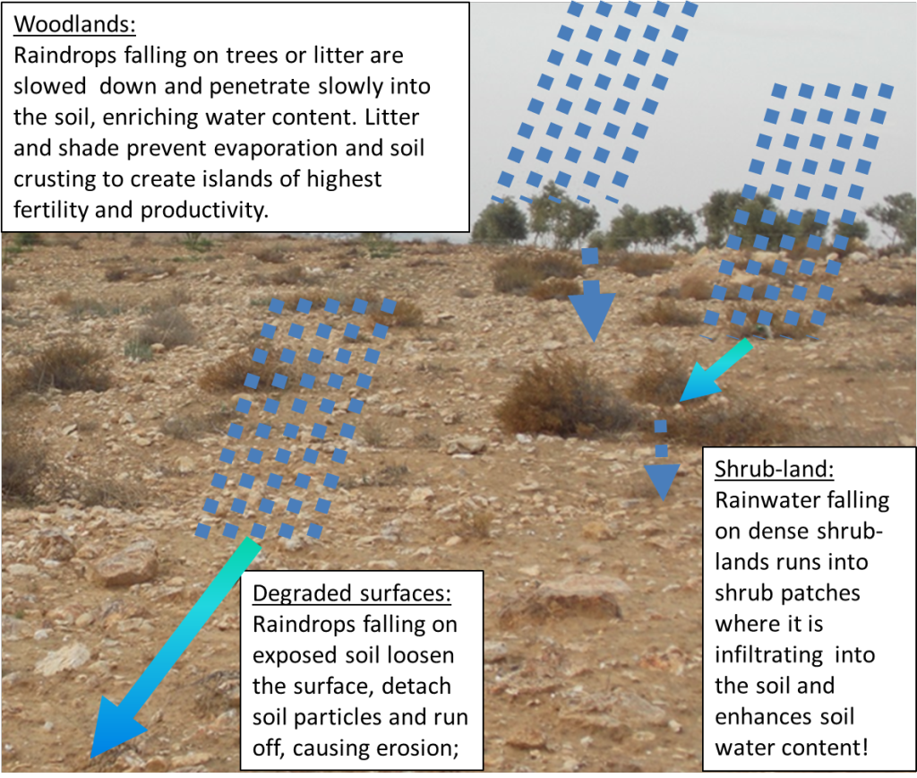 Water Runoff Control in Drylands