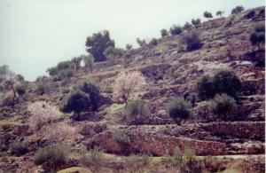 Restored Agroforestry Landscape