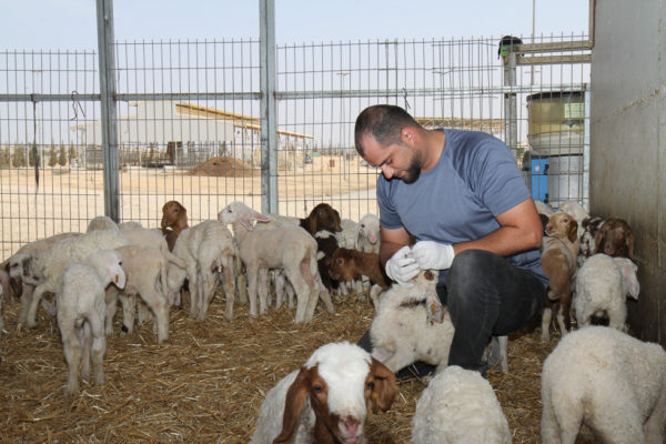 Project Wadi Attir Baby Animals