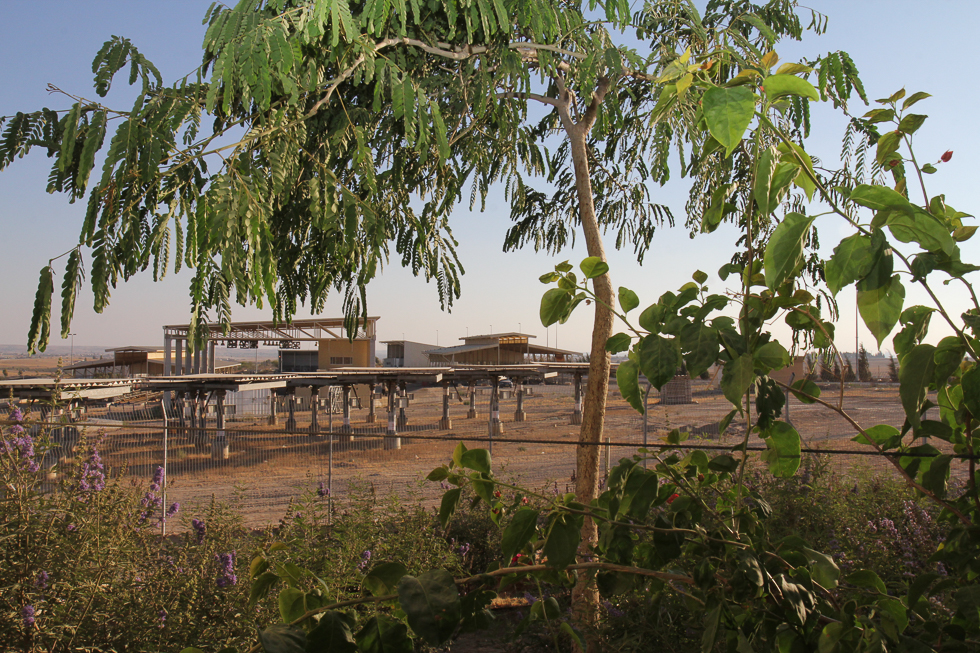 Project Wadi Attir foliage and solar field