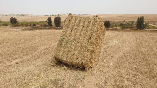 A hay bale produced onsite at Project Wadi Attir