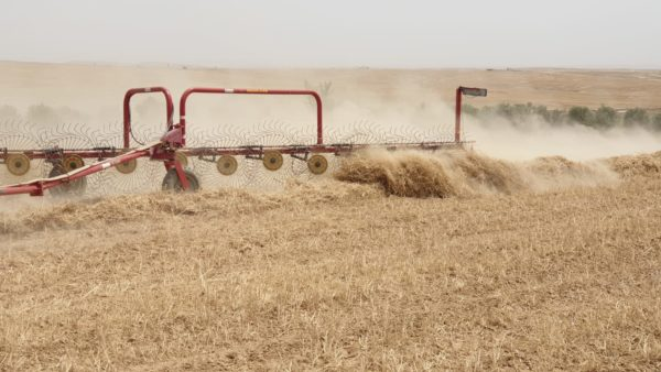 Feed harvest at Project Wadi Attir